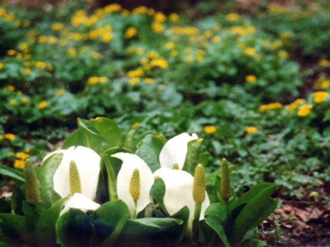 花車近くの秘密の花園