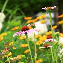 【周辺】お花も見に来てくださいね