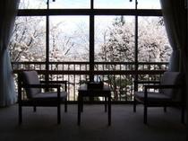桜の見える客室もあります♪