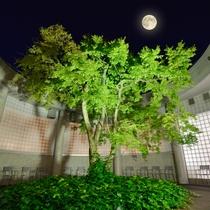大浴場(中庭)イメージ