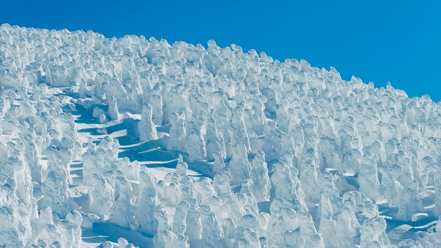 [蔵王の樹氷]スノーモンスターとも呼ばれる幻想的な氷の造形。広大な樹氷原のライトアップもあります。