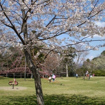 *春の 一戦場スポーツ公園