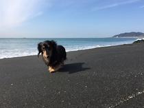 愛犬と海へお散歩♪