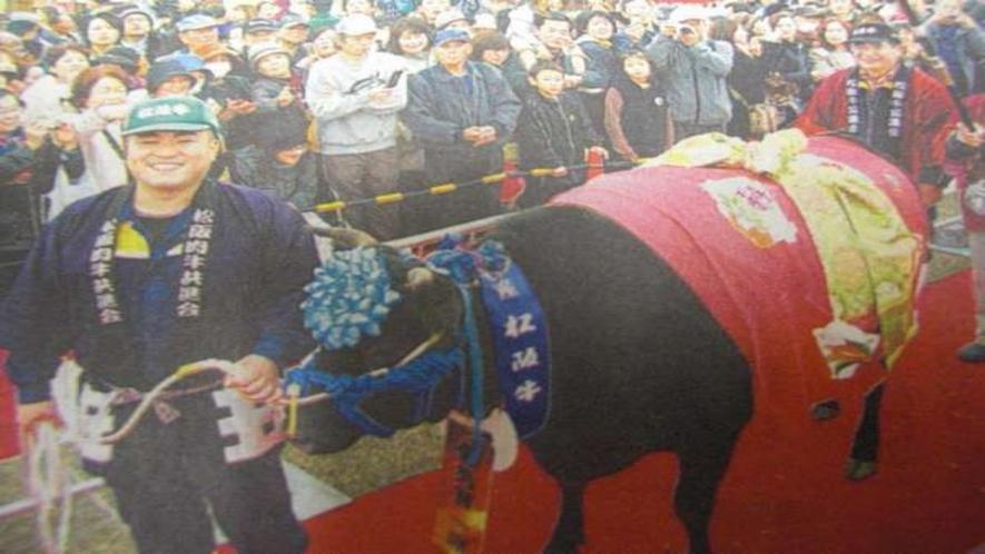 松阪牛の品評会の様子です。
