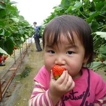 美味しいイチゴをがぶり!