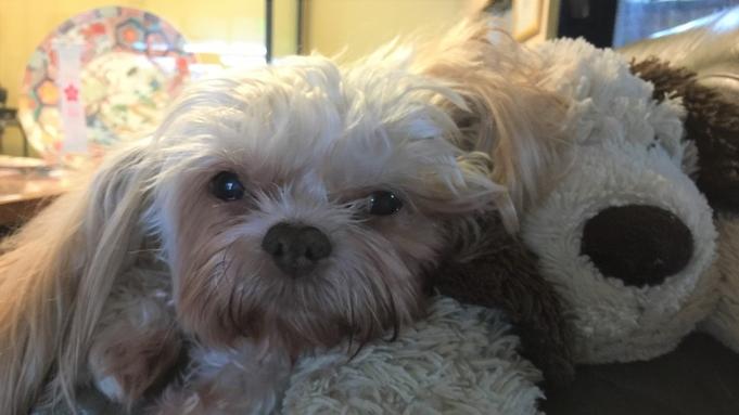 【ポイント5倍・わんちゃん同伴プラン】小型犬限定★看板犬ルイもお出迎え♪