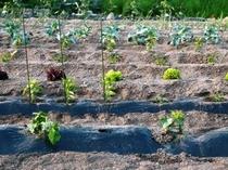升形農園で自家製野菜