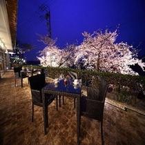 テラス夜桜