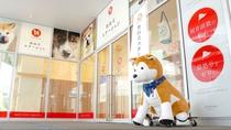 【秋田犬ステーション】秋田犬の愛くるしい姿を間近で見れるのが嬉しい。曜日限定なので事前に確認を。