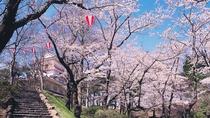 【千秋公園】見頃は毎年4月中旬〜下旬。日本さくら名所100選にも選定されている。