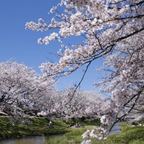 【春:玉湯川沿いの桜】