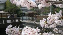 【春:松乃湯前の桜】  淡い桃色の花が皆様をお迎えします。