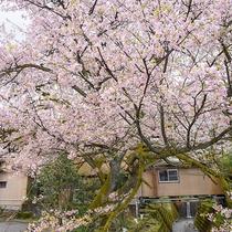 *周辺/春は桜をお楽しみいただけます。