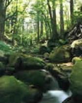 水木沢天然林