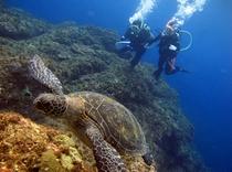 海カメとダイバー