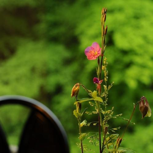■茶房『まゆの花』■