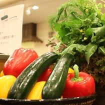 新鮮野菜 ディスプレー