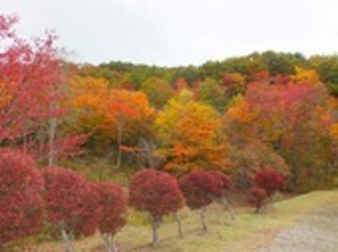 観音沼の紅葉