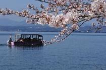 海津大崎の桜屋形