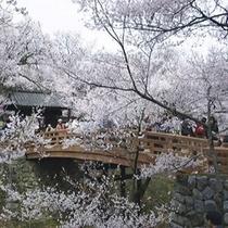 高遠城址公園・桜