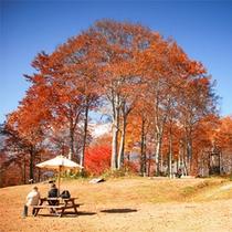 *ねずこの森トレッキング/秋を満喫!まるで絵のような景色の中で過ごす休日。