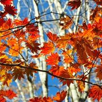 *秋の景色/周辺にはネズの森や三段紅葉など見どころがいっぱい!