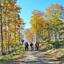 *秋の景色/紅葉を見ながらトレッキングを楽しめる人気の季節です。