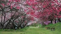 花桃の木のトンネル