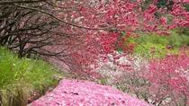 花桃の絨毯