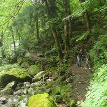夫婦滝散策道