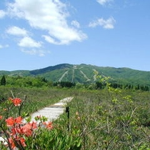 湿原植物園から大日岳を望む