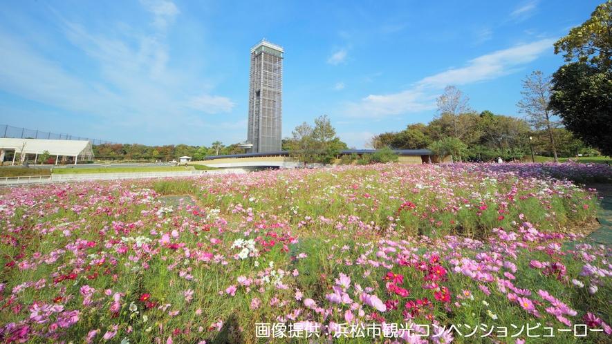 <浜名湖ガーデンパーク>1300本の桜と50万球のチューリップ、720品種・100万本の花菖蒲など。