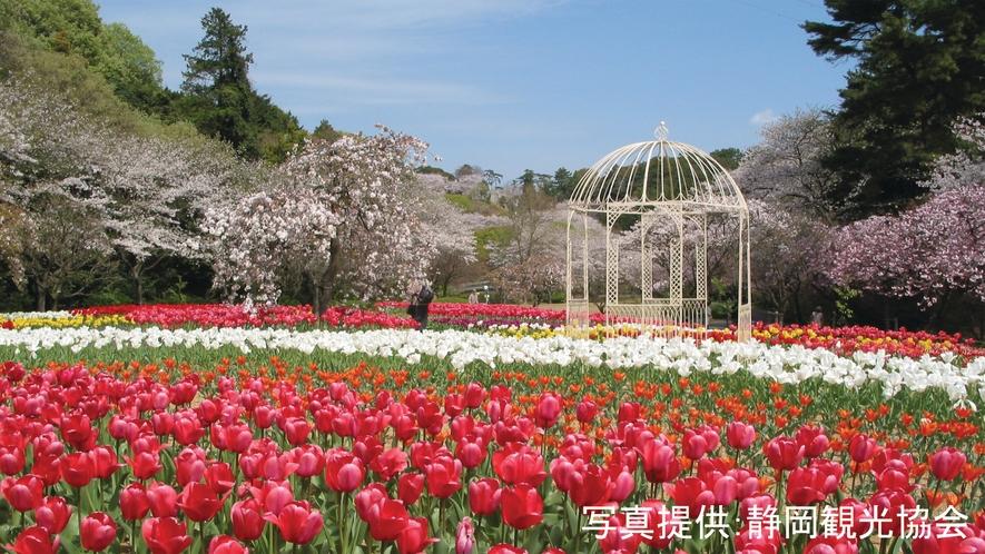 <はままつフラワーパーク>四季折々の草花やライトアップを楽しめます☆