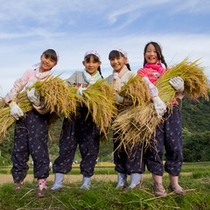 *【稲刈り体験プラン】毎年9~10月頃に開催予定。刈り取った稲は精米し、後日ご自宅までお届けします。