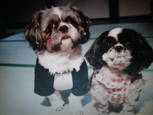 【ペットに優しい】一緒にトレキングやお部屋で留守もお部屋で一緒に泊まれて、中型犬まで料金が無料です。