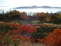 紅葉位ヶ原雲上ナナカマド301x226