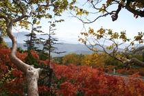 Autumn color above clouds