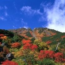 御岳山紅葉