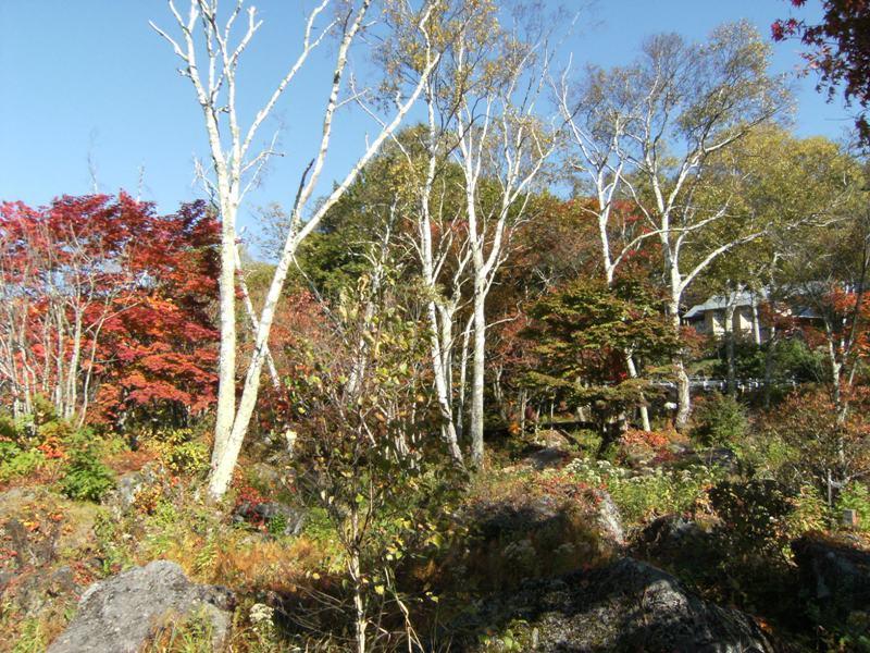 紅葉と白樺湖