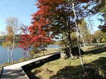紅葉と白樺湖2
