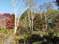 紅葉の白樺湖3