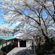 ◆別所温泉駅◆春