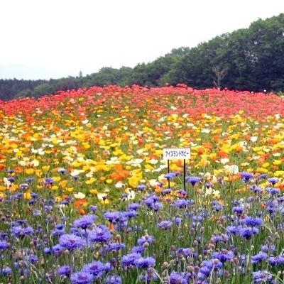 「花の回廊」…このグループの写真は春季のものです。4月中旬〜5月上旬が見頃となります。