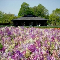 「花の回廊」…秩父ミューズパークに新規オープンしたのが、この「花の回廊」です。見頃期間中は有料です。