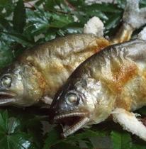 『川魚の塩焼き』…一匹1,050円。鮎・岩魚・山女魚をご用意しております。食べ比べもオススメです。
