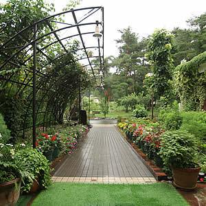 お庭の通路