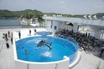 九十九島の海を再現した水族館「海きらら」