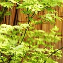 館内 お庭