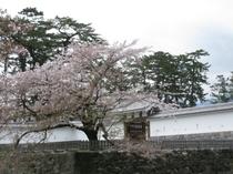 城址公園桜並木7