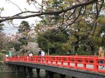 城址公園桜並木6